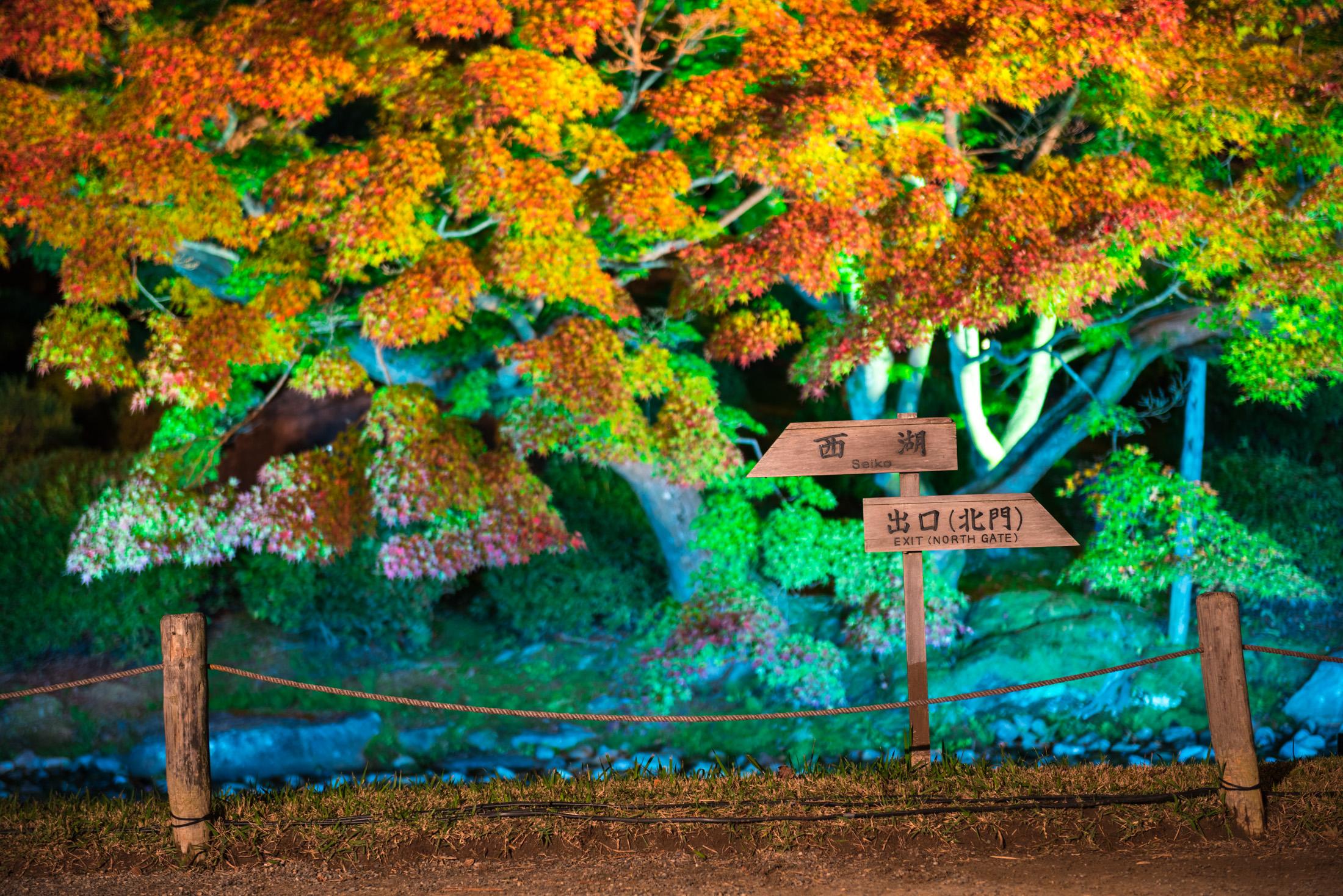 autumn, garden, japan, japanese, kagawa, shikoku