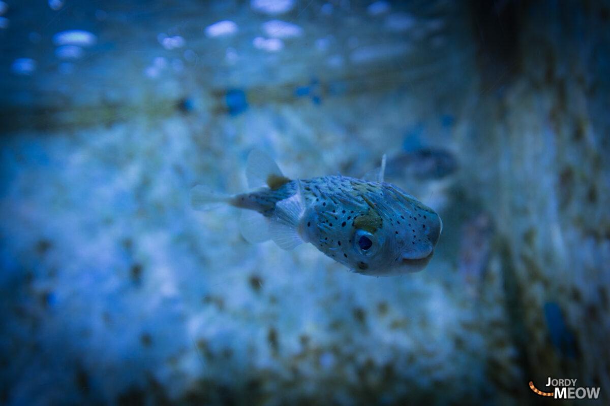 Okinawa Aquarium Fish