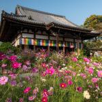 Hannya-ji: The Cosmos Temple
